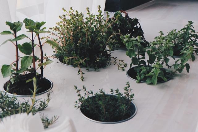 tulsi plantes adaptogènes