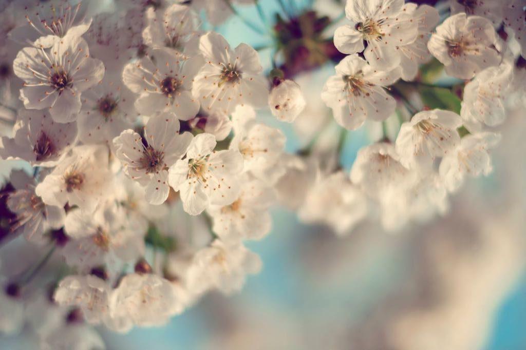 fleurs blanches méditation