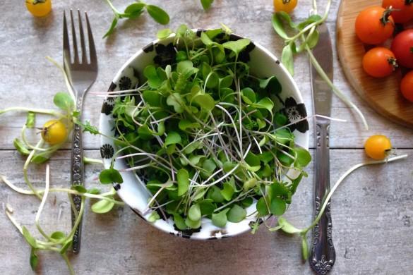 germinations en bol