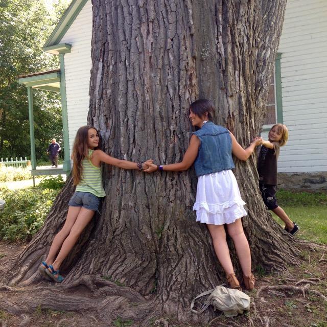 arbre-amille