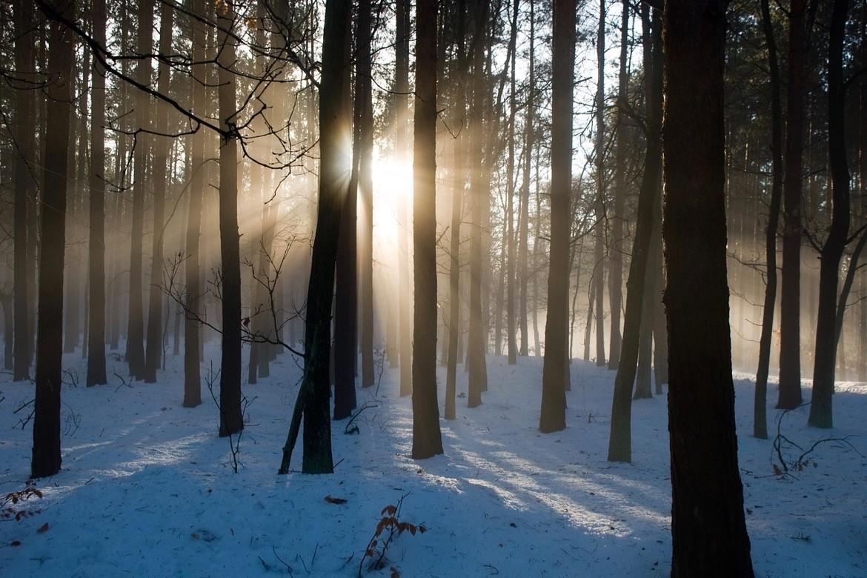 forêthérapie