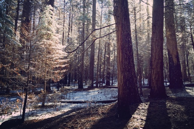 forêt-hiver