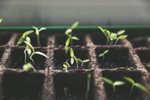 semences et pousses