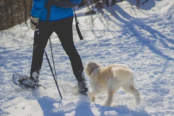 raquettes neige chien