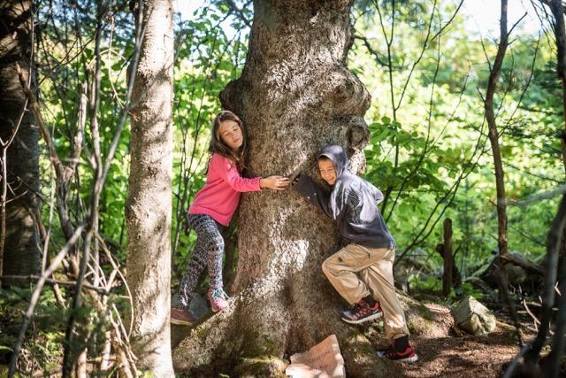 arbres à souhaits