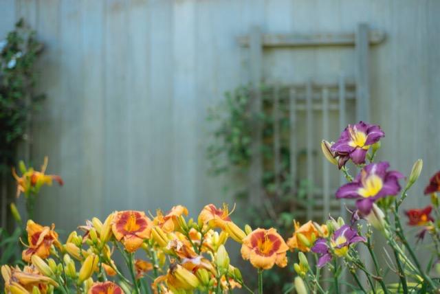 potager et fleurs