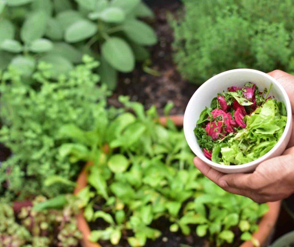 Salade l'été