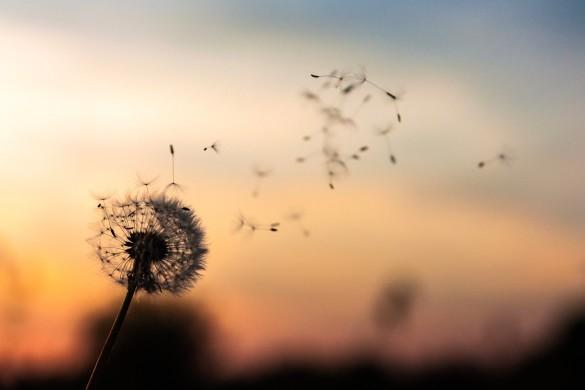 3 clés pour notre courbe du bonheur