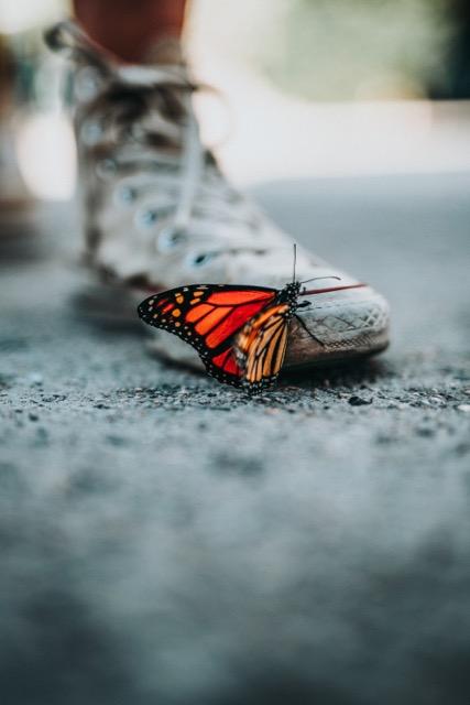 bonheur papillon