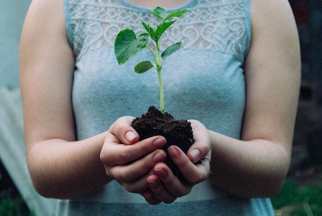 planter arbre matelas dans une boite BleuEco