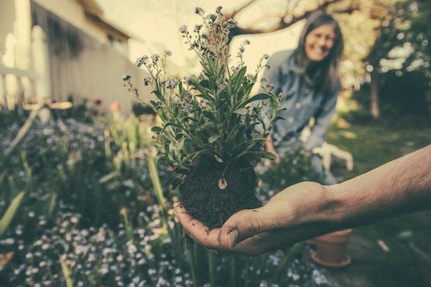arbre plantes jardiner