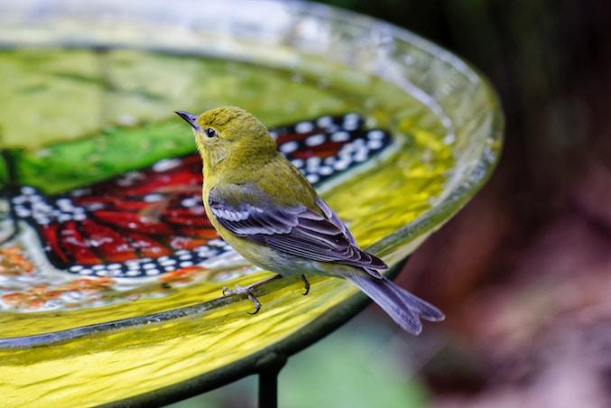 jardin oiseau mangeoire bain