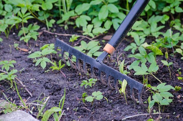 jardinage rateau outils