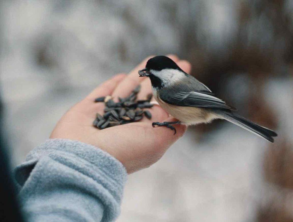 hiver oiseau main