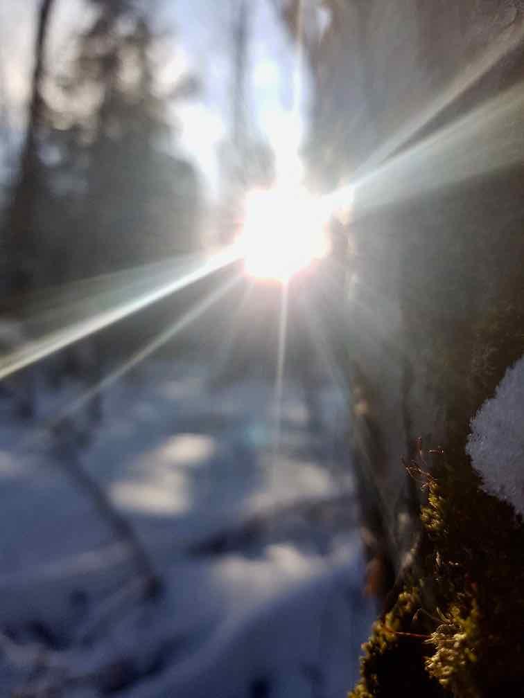 bain de forêt branches arbres soleil rayon lumière