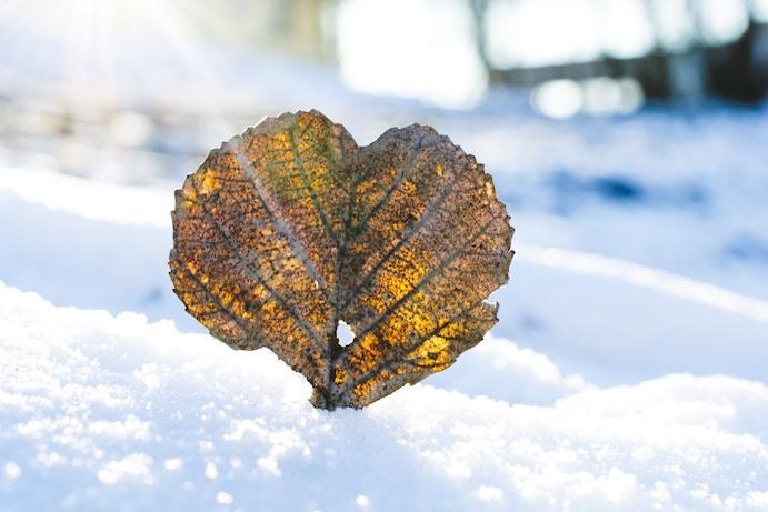 neige feuille